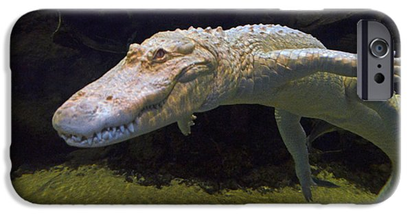 Strange iPhone Cases - Albino Alligator Swimming Underwater iPhone Case by Jim Fitzpatrick