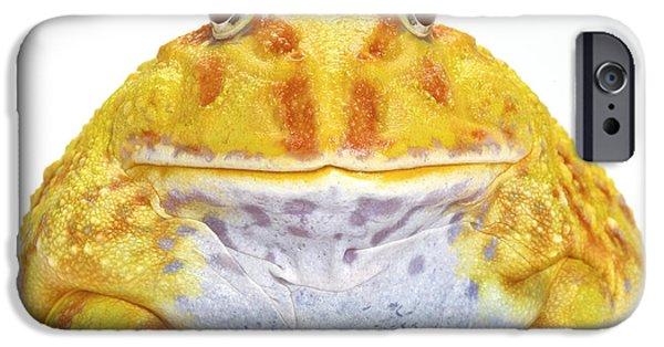 Pacman iPhone Cases - Albino Chacoan Horned Frog iPhone Case by Michel Gunther