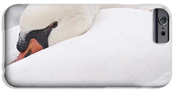 Swans... iPhone Cases - Alert rest iPhone Case by Simona Ghidini