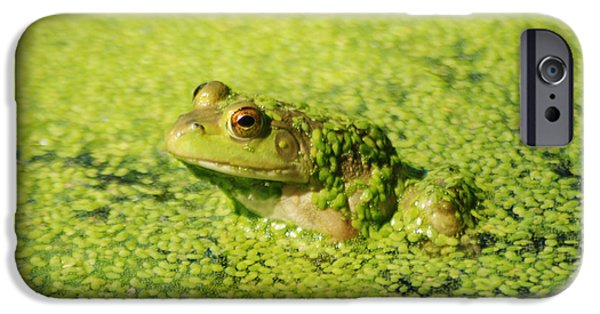 Invertebrates Mixed Media iPhone Cases - Algae covered frog iPhone Case by Optical Playground By MP Ray