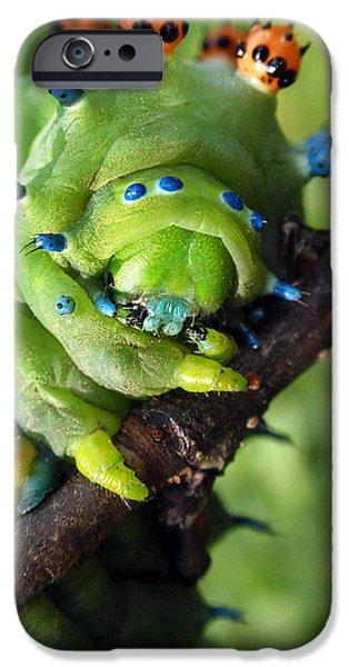 Alien Nature Cecropia Caterpillar iPhone Case by Christina Rollo