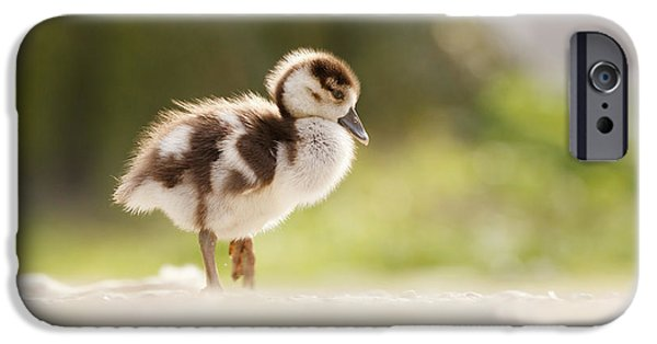 Juveniles iPhone Cases - All Alone - Egyptean Gosling and a Tree iPhone Case by Roeselien Raimond