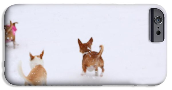Puppies iPhone Cases - All Dogs Go To Heaven iPhone Case by Chihuahua Kisses