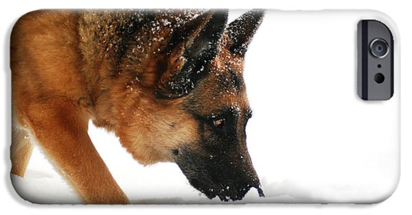 Dog In Landscape iPhone Cases - All in a Days Work iPhone Case by Michele Thielke