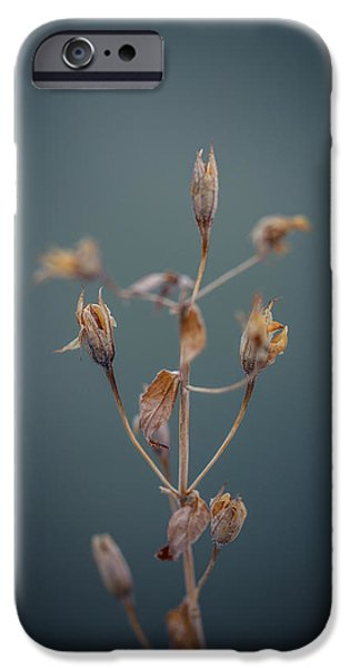 Plant iPhone Cases - All Of These iPhone Case by Shane Holsclaw