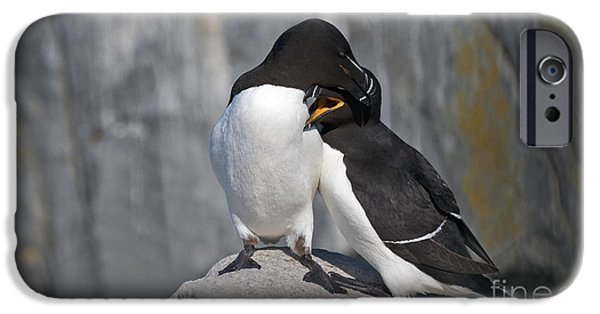 Razorbill iPhone Cases - All You Need is Love... iPhone Case by Nina Stavlund