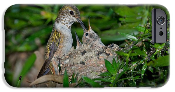 Fed iPhone Cases - Allens Hummingbird Feeds Young iPhone Case by Anthony Mercieca