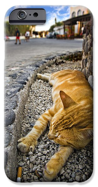 Alley iPhone Cases - Alley Cat Siesta iPhone Case by Meirion Matthias