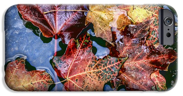 Asphalt iPhone Cases - Alley Leaves iPhone Case by Nikolyn McDonald
