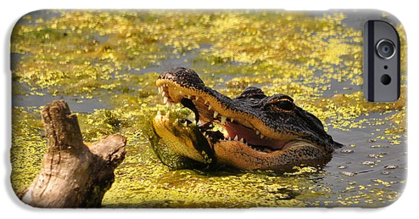 Alligator iPhone Cases - Alligator Ambush iPhone Case by Al Powell Photography USA