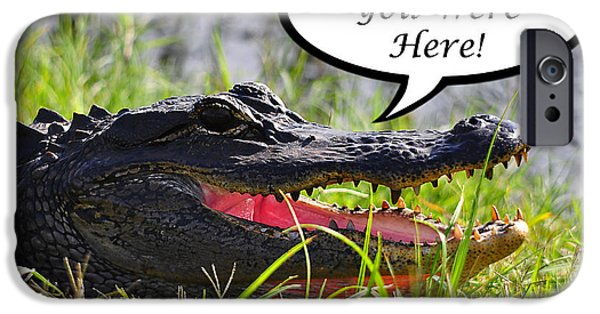 Florida Gators iPhone Cases - Alligator Greeting Card iPhone Case by Al Powell Photography USA