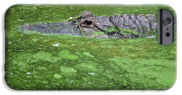 Alga iPhone Cases - Alligator in Swamp iPhone Case by Aimee L Maher Photography and Art
