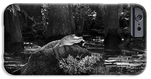 Louisiana Photographs iPhone Cases - Alligator in the Louisiana Bayou iPhone Case by Mountain Dreams