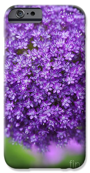 Alliums iPhone Cases - Allium Ambassador iPhone Case by Tim Gainey