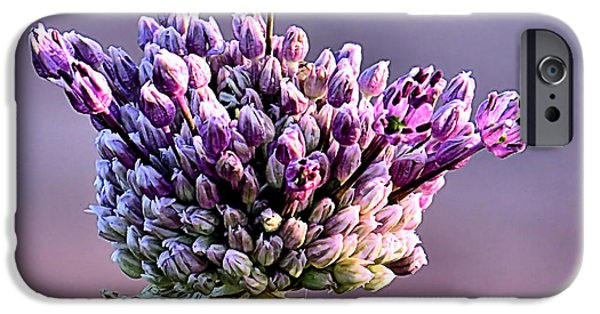 Purple Sensation iPhone Cases - Allium Bud iPhone Case by Janice Drew