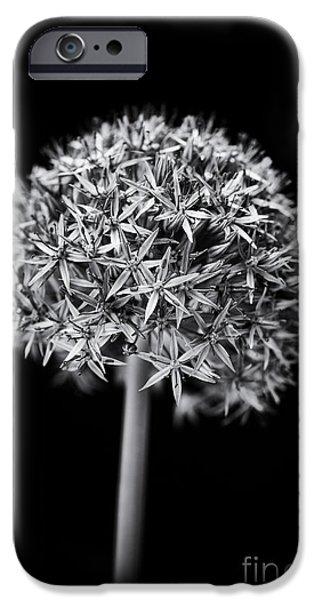 Alliums iPhone Cases - Allium Globemaster iPhone Case by Tim Gainey