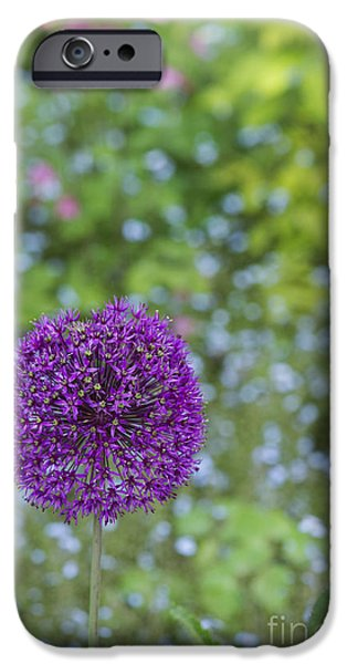 Purple Sensation iPhone Cases - Allium Hollandicum Purple Sensation Flower iPhone Case by Tim Gainey