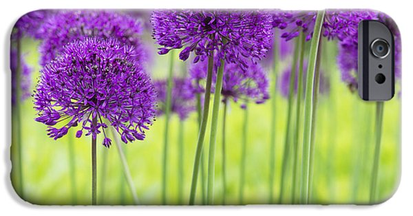Purple Sensation iPhone Cases - Allium Hollandicum Purple Sensation Flowers iPhone Case by Tim Gainey