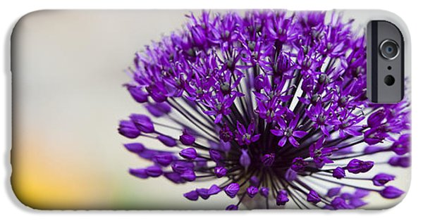 Allium Hollandicum iPhone Cases - Allium hollandicum Purple Sensation Panoramic iPhone Case by Tim Gainey