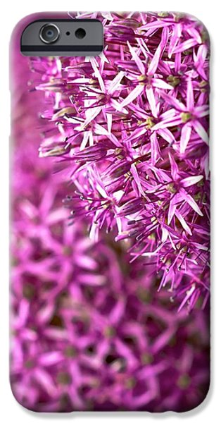 Purple Sensation iPhone Cases - Allium Hollandicum Purple Sensation  iPhone Case by Peter Jed