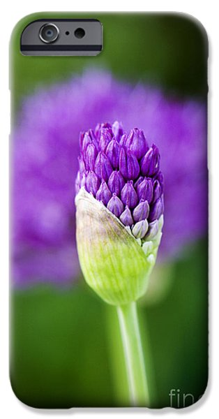 Macro Photographs iPhone Cases - Allium hollandicum Purple Sensation iPhone Case by Tim Gainey