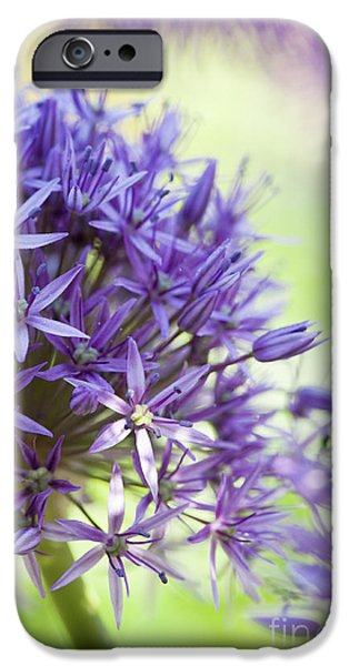 Purple Sensation iPhone Cases - Allium Hollandicum  iPhone Case by Tim Gainey