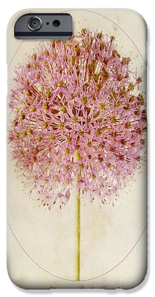 Sepia Flowers iPhone Cases - Allium Pink Jewel iPhone Case by John Edwards