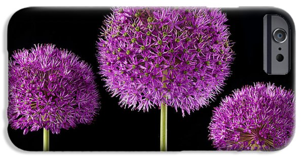 Alliums iPhone Cases - Allium Trio iPhone Case by John Edwards