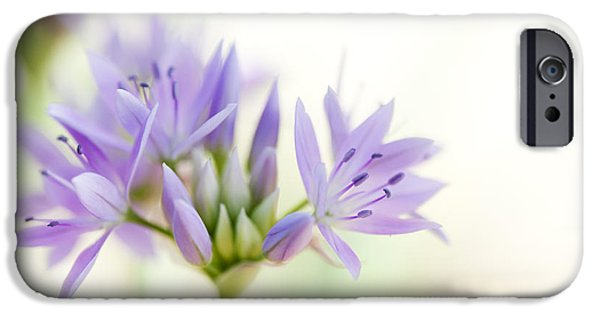 Alliums iPhone Cases - Allium Unifolium Eros iPhone Case by Tim Gainey