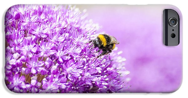 Purple Sensation iPhone Cases - Allium with Bee iPhone Case by Chay Bewley
