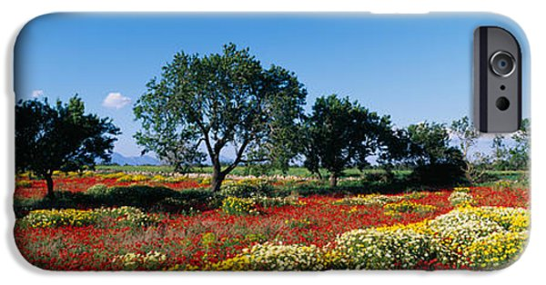 Meadow Photographs iPhone Cases - Almond Trees In A Field, Poppy Meadow iPhone Case by Panoramic Images