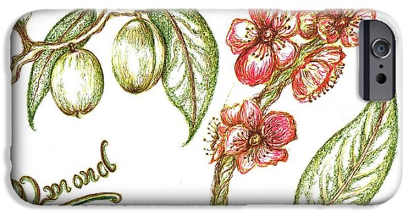 Shed Drawings iPhone Cases - Almond with flowers iPhone Case by Teresa White
