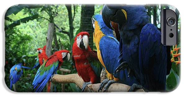 Sharon Mau iPhone Cases - Aloha kaua Aloha mai no Aloha aku Beautiful Macaw iPhone Case by Sharon Mau