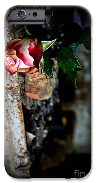 Rose Pyrography iPhone Cases - Alone with you iPhone Case by Kirsti H
