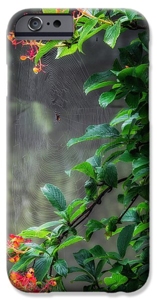 Spider iPhone Cases - Along Came A Spider iPhone Case by Bill  Wakeley