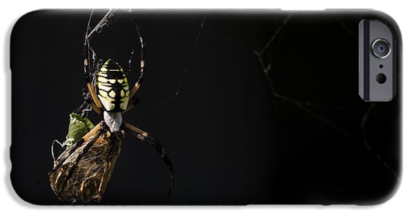 Eating Entomology iPhone Cases - Along Came a Spider iPhone Case by Heather Applegate