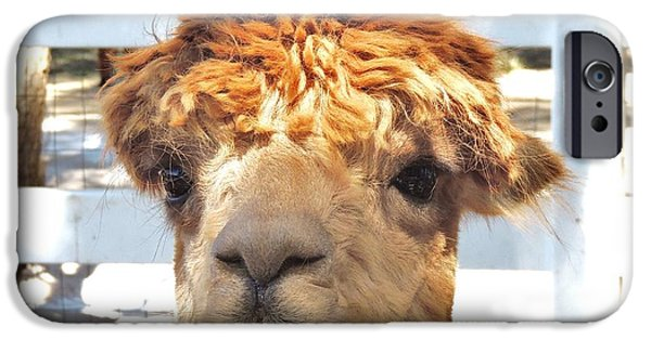Temecula iPhone Cases - Alpaca Bed Head iPhone Case by Helen Carson