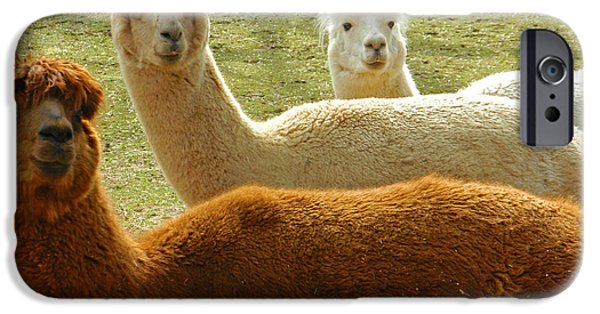 Smithsonian iPhone Cases - Alpaca Trio iPhone Case by Emmy Marie Vickers