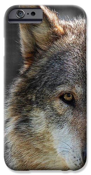 Wolf Image iPhone Cases - Alpha Male Wolf - Dont Mess With Me iPhone Case by Gill Billington