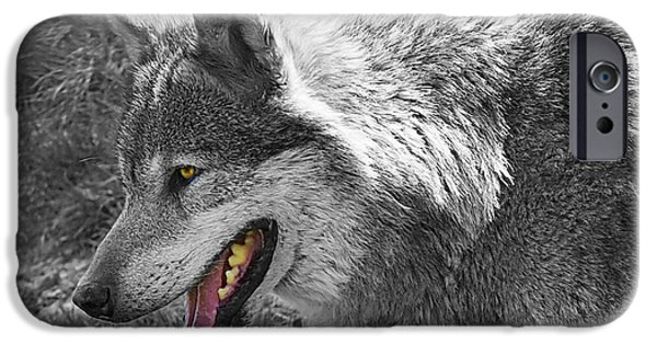 Wolf Image iPhone Cases - Alpha Male Wolf - You Look Tasty 2 iPhone Case by Gill Billington
