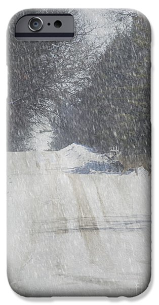 Snowy Day Mixed Media iPhone Cases - Alpine Buck iPhone Case by Keith Bell