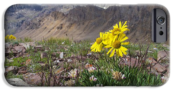 Dog And Wildflowers iPhone Cases - Alpine Flowers iPhone Case by Aaron Spong