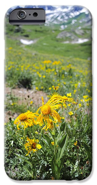 Snowy Day iPhone Cases - Alpine Sunflowers iPhone Case by Aaron Spong