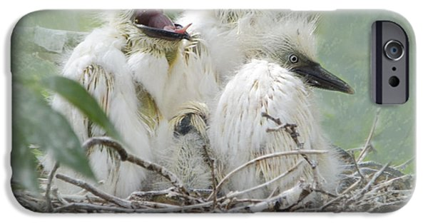 Cattle Egret iPhone Cases - Always One in a Crowd iPhone Case by Betty LaRue
