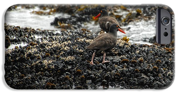 Sea Birds iPhone Cases - Always Walking On Shells With You iPhone Case by Donna Blackhall