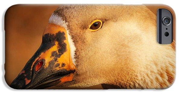 Fauna iPhone Cases - Am I Still Beautiful iPhone Case by Wim Lanclus