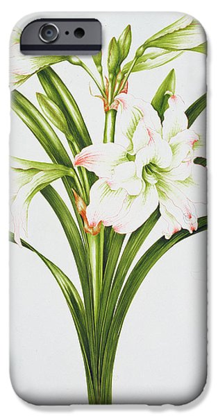 White Flowers Paintings iPhone Cases - Amarylis Mary Lou iPhone Case by Sally Crosthwaite