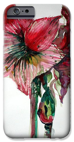 Botanical Drawings iPhone Cases - Amaryllis iPhone Case by Mindy Newman