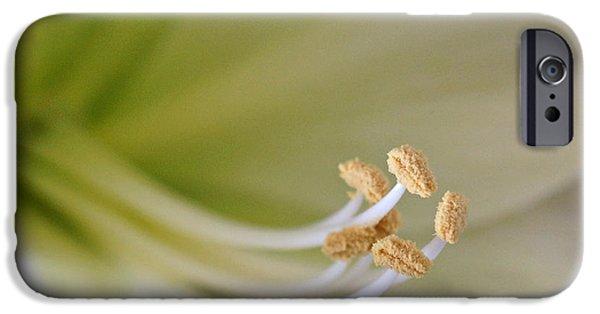 Indiana Flowers iPhone Cases - Amaryllis  iPhone Case by Sandy Keeton