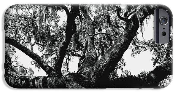 Mighty Oak iPhone Cases - Amazing Oak Tree iPhone Case by Debra Forand